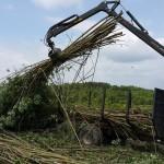 zrebka drzewna